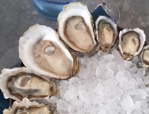 Oysters in Summer